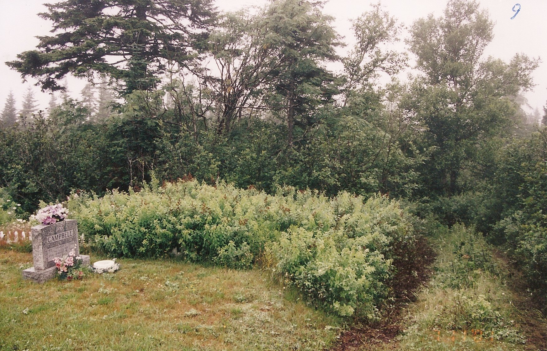 12 Clearing brush -rear 1